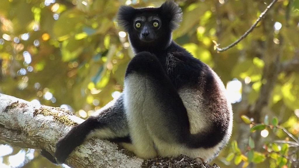 Cautand Madagascar femeie