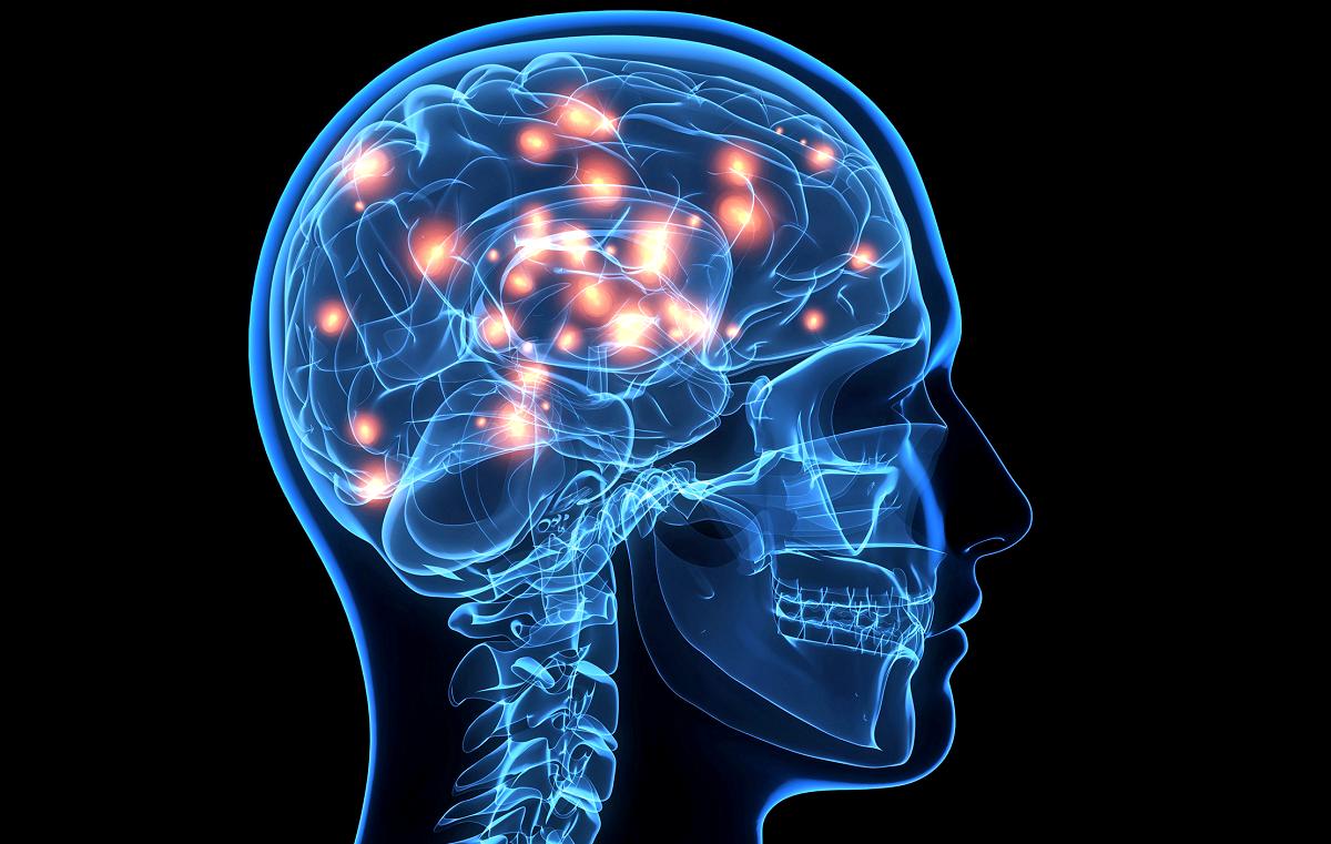 cati neuroni are creierul