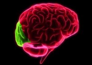lobul-occipital