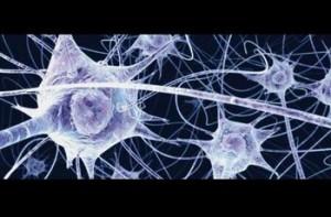 retea-neuroni