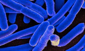 conan-bacterianul