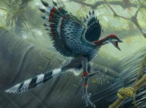 archaeopteryx-300x221