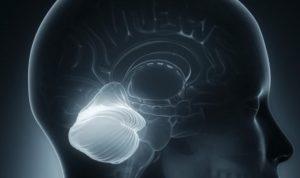 cerebel