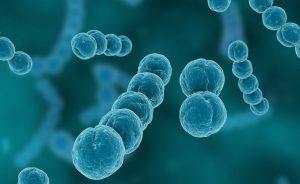 nanobacterie