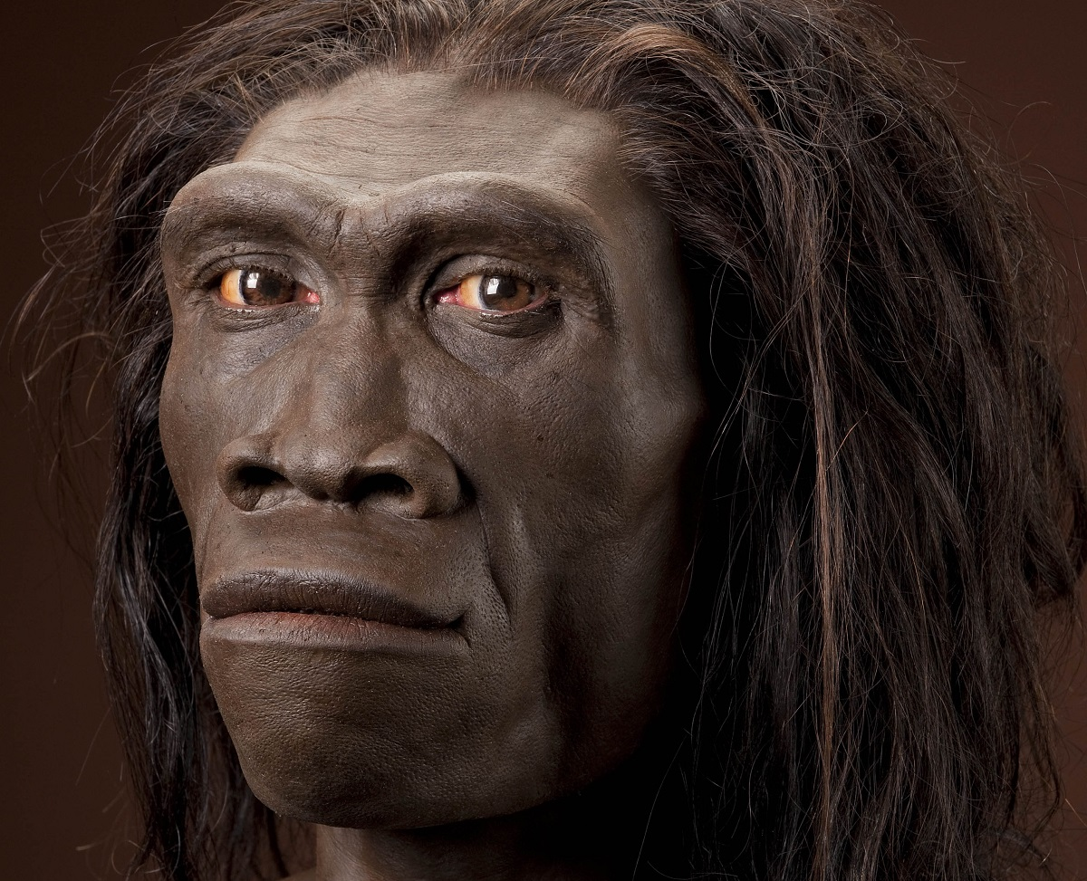 taking a look at homo erectus Let's dive deep and take a look at some of the major events in the development of the human species, homo sapiens,  itself the ancestor of homo erectus.