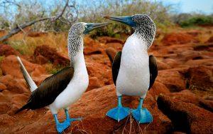 pasari-galapagos
