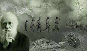 argumente-evolutionism