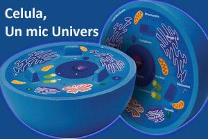 celula-un-mic-univers