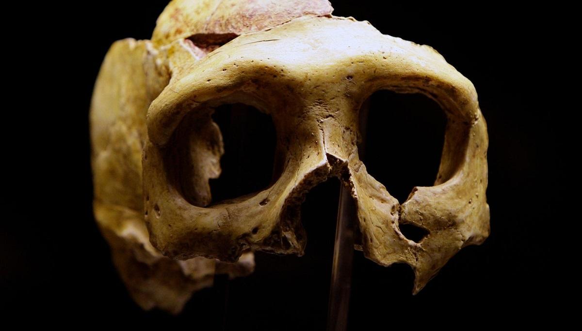 Mama Neanderthal, tatal Denisovan
