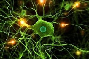 neuron-memorie